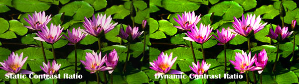 dynamic vs static contrast  ratio